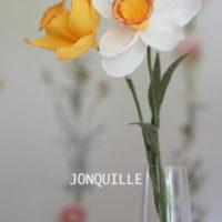 JONQUILLE
