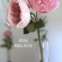 ROSE ANGLAISE OK NOMEE